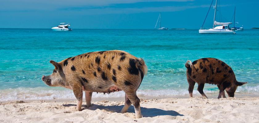 Île aux Cochons