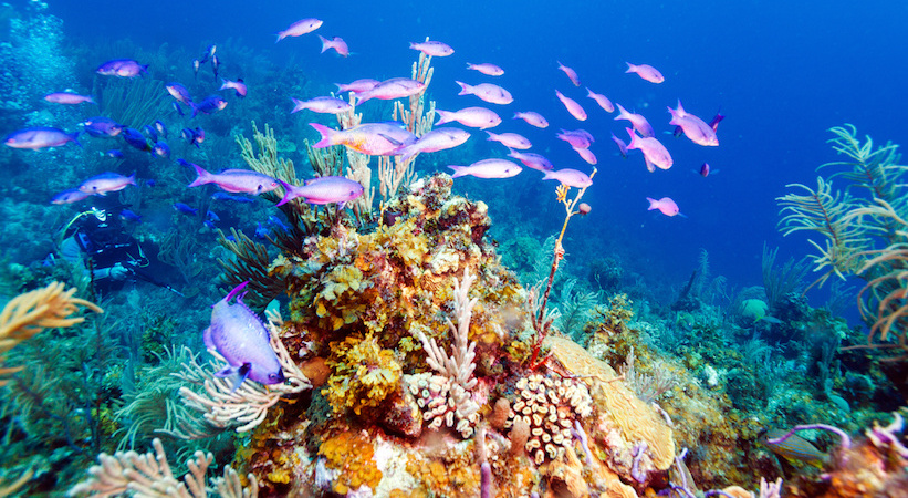 Récifs coralliens à Cayo Largo